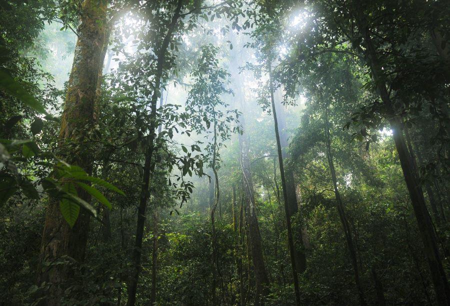ジャングル - 第1回 SDGsの背景を考える~私たちの生活を維持するために地球は何個必要なのか?〜